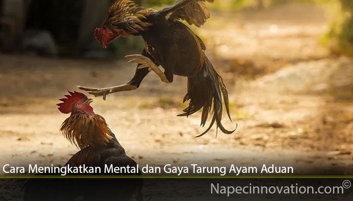 Cara Meningkatkan Mental dan Gaya Tarung Ayam Aduan